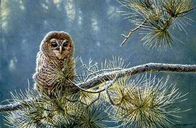 Out On A Limb – Young Barred Owl- Signed By The Artist								 – Paper Lithograph – Limited Edition – 950 S/N – 19 x 28