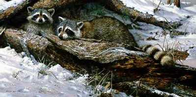 Refuge – Raccoons- Signed By The Artist – PaperLithograph – Limited Edition – 950S/N – 14 5/8x29 5/8