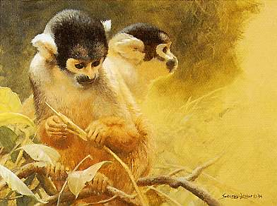 Squirrel Monkey Study- Signed By The Artist								 – Paper Lithograph – Limited Edition – 150 S/N – 8 x 11 –