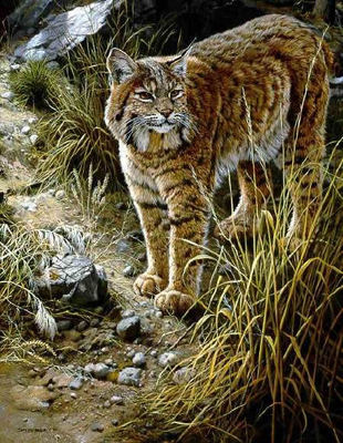 Sundown Alert – Bobcat- Signed By The Artist – PaperLithograph – Limited Edition – 950S/N – 25 5/8x20