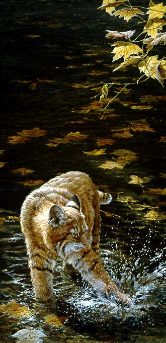 Water Sport – Bobcat- Signed By The Artist – PaperLithograph – Limited Edition – 950S/N – 32x15 5/8