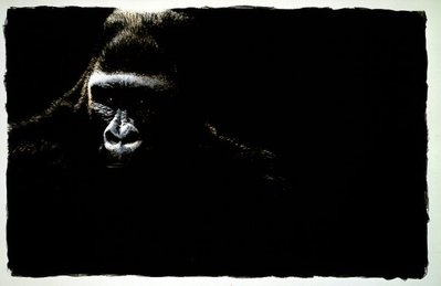 Gorilla- Signed By The Artist – PaperLithograph – Limited Edition – 11A/P – 21 1/8x32 5/8