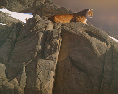 Canyon Outpost – Cougar- Signed By The Artist – PaperLithograph  – Limited Edition  – 650S/N  –  22 1/2x28