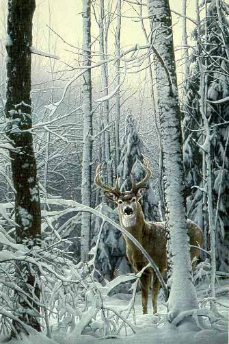 Curious Presence – Whitetail Deer- Signed By The Artist – PaperLithograph  – Limited Edition  – 950S/N  –  30x20