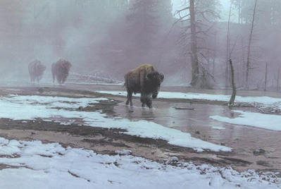 Yellowstone Procession- Signed By The Artist – PaperLithograph – Limited Edition – 76A/P – 21 1/2x32 1/4