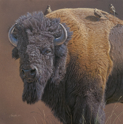 Cowbird Companions- Signed By The Artist – CanvasGiclee  – Limited Edition  – 75S/N  –  16x16