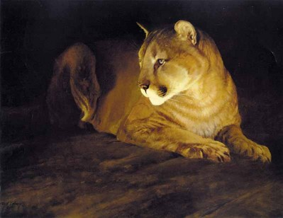 By Firelight – Mountain Lion- Signed By The Artist – PaperLithograph  – Limited Edition  – 1250S/N  –  19 1/8x28 3/4