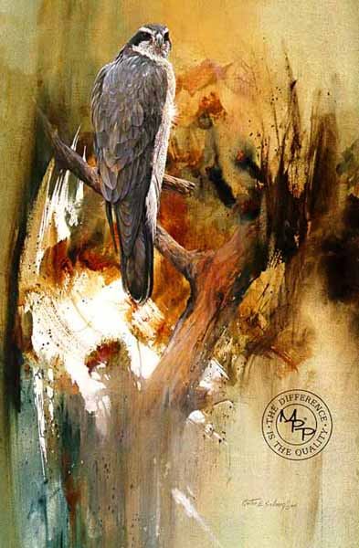 Deceptive Calm – Goshawk- Signed By The Artist – PaperLithograph  – Limited Edition  – 950S/N  –  19 1/4x12 7/8