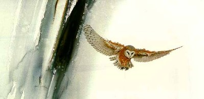 Edge Of Night – Barn Owl- Signed By The Artist – PaperLithograph  – Limited Edition  – 950S/N  –  16 1/2x33  –