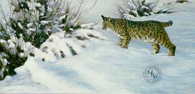 Something Moved – Bobcat- Signed By The Artist								 – Paper Lithograph – Limited Edition – 950 S/N – 19 x 31 5/8