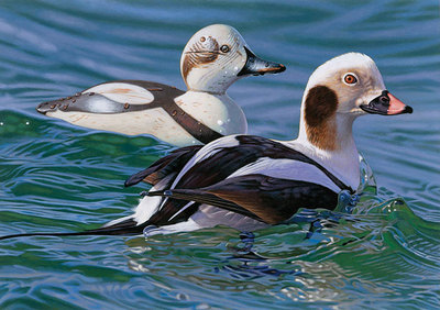 Long-Tailed Duck With Decoy – 2009-2010 Federal Duck Stamp Print- Signed By The Artist								 – Canvas Giclee – Limited Edition – 500 S/N – 7 x 10