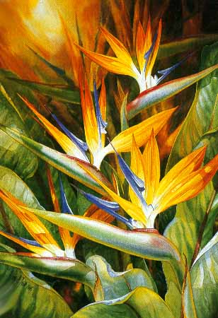 Birds Of Paradise- Signed By The Artist – PaperLithograph  – Limited Edition  – 600S/N  –  24 1/2x17 1/4  –
