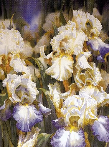 Iris Garden- Signed By The Artist – PaperLithograph  – Limited Edition  – 600S/N  –  31x22  –