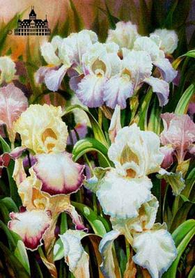 Iris I- Signed By The Artist – PaperLithograph  – Limited Edition  – 1000S/N  –  20x19 1/2  –