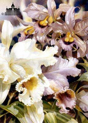 Orchids II- Signed By The Artist – PaperLithograph  – Limited Edition  – 1000S/N  –  24x18  –