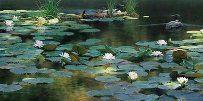 Leaving The Lilies- Signed By The Artist – CanvasGiclee – Limited Edition – 95S/N – 18x36