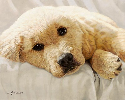Best Loved Breeds: Golden Retriever Pup- Signed By The Artist – CanvasGiclee – Limited Edition – 150S/N – 14x11 –