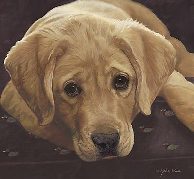 Best Loved Breeds: Yellow Labrador Retriever- Signed By The Artist – CanvasGiclee – Limited Edition – 150S/N – 12x13