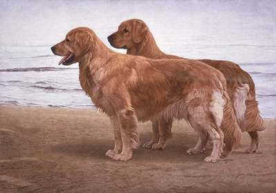 Goldens At The Shore- Signed By The Artist – PaperLithograph – Limited Edition – 850S/N – 14x19 3/4