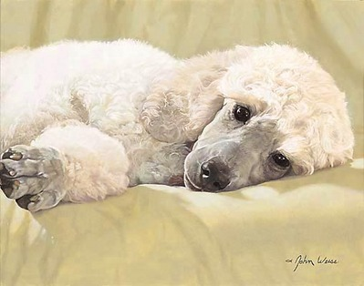 Best Loved Breeds: White Standard Poodle (Original Painting)- Signed By The Artist – OilPainting  – Original  – Signed  –  12 3/4x16 1/4