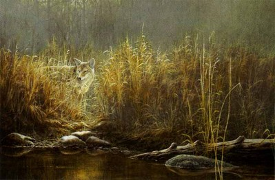 Evening Glow – Coyote- Signed By The Artist – PaperLithograph  – Limited Edition  – 750S/N  –  19 1/2x29 1/4