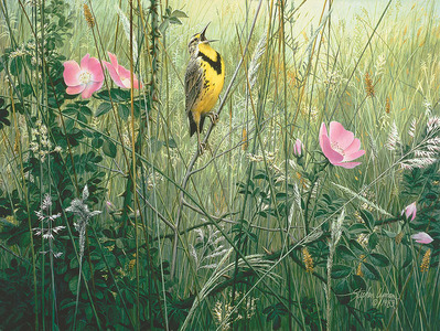 Song Of The Meadow- CanvasGiclee – Open Edition – Fine Art – 16x21